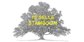 TeSelle Stamboom